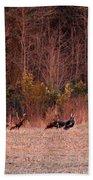 Turkey - Wild Turkey - Seventeen Longbeards Beach Towel