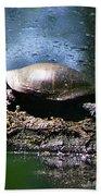 Turtle I Beach Towel
