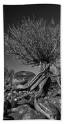 Twisted Beauty - Bw Beach Towel by Christopher Holmes
