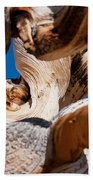 Twisted Bristlecone Pine Beach Towel