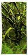 Twisted Rain Forest Beach Towel
