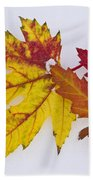 Two Autumn Maple Leaves  Beach Towel