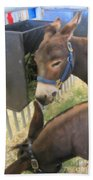 Two Donkeys Eating Beach Towel by Donna Munro