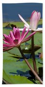 Two Graceful Water Lilies Beach Towel