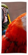 Two Parrots Closeup Beach Towel