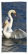 Two Swans Playing Beach Towel