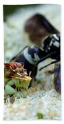 Ugly Bug Feast 2 Beach Towel