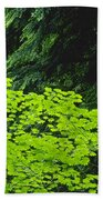 Umbrella Of Trees In Forest Beach Towel