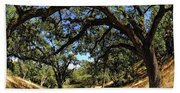 Under The Oak Canopy Beach Towel