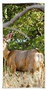 Utah Mule Deer Beach Towel