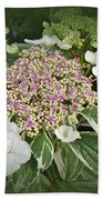 Variegated Lace Cap Hydrangea - Pink And White Beach Towel