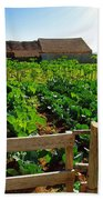 Vegetable Farm Beach Towel by Carlos Caetano