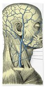 Veins Of The Head And Neck Beach Towel
