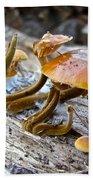 Velvet Foot Mushroom - Flammulina Velutipes Beach Towel