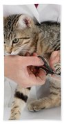 Vet Clipping Kittens Claws Beach Towel