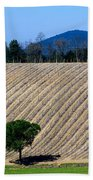 Vineyard On A Hill With Trees Beach Towel
