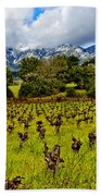 Vineyards And Mt St. Helena Beach Towel by Garry Gay