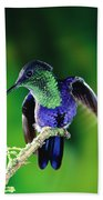 Violet-crowned Woodnymph Thalurania Beach Towel