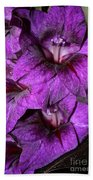 Violet Glads Beach Towel