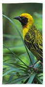 Vitelline Masked Weaver Beach Towel
