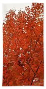 Vividly Sugar Maple Beach Towel