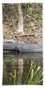 Wakulla Springs Alligator Beach Towel