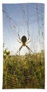 Wasp Spider Argiope Bruennichi In Web Beach Towel