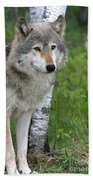 Watchful Eyes Beach Towel