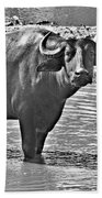 Water Buffalo In Black And White Beach Towel
