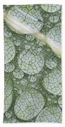 Water Droplets On Leaf, Annapolis Beach Towel