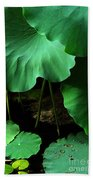 Water Lilies Of Green Beach Towel