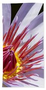 Water Lily Soaking Up The Sun Light Beach Towel