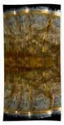 Water Penny Beetle Larva Beach Towel