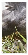 Waterhen Coot On Nest With Eggs Beach Towel
