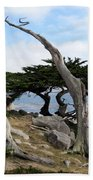 Weathered Tree On California Coast Beach Towel