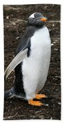 Welcome From A Gentoo Penguin Beach Towel