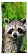 Wetlands Racoon Bandit Beach Towel