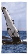 Whale Fin Above Water Beach Towel