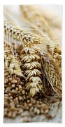 Wheat Ears And Grain Beach Towel by Elena Elisseeva