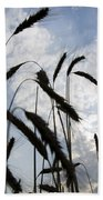 Wheat With Blue Sky Beach Towel