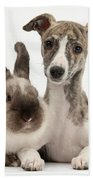 Whippet Pup With Colorpoint Rabbit Beach Towel