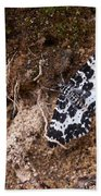 White-banded Black Moth Beach Towel