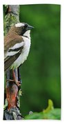 White-browed Sparrow-weaver Beach Towel