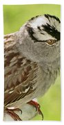 White Crowned Sparrow II Beach Towel