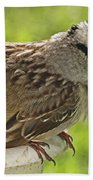 White Crowned Sparrow Sends A Warning Beach Towel