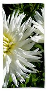 White Dahlias In Autumn  Beach Towel