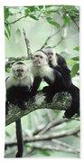 White-faced Capuchins Beach Towel