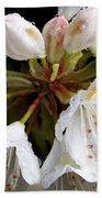 White Rhododendron Blooms  Beach Towel