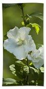 White Rose Of Sharon Beach Towel by Teresa Mucha