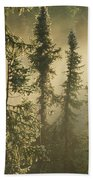 White Spruce In Mist At Sunrise Beach Towel